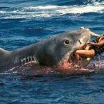 海水浴に来ていた18歳の女の子がサメに・・・海面が血に染まる怖すぎる海の悲劇