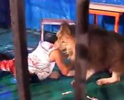 グロ動画|ライオンの檻に入った人が目の前で喰い殺されるのを撮影してみた