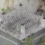 スズメバチの巣の出入り口に5600ボルトの電気網を設置して駆除してみたw