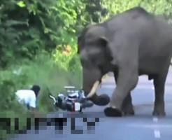 野生の象が近くにいる地域で人間とばったり出くわしたら逃げないとヤバい