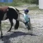 衝撃映像|お馬さん触りたい・・・と思った少年の悲劇・・・もう二度と近寄る事はないでしょう
