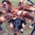 恐怖映像|ワンちゃんに蜘蛛のコスプレ服着せて夜に悪戯したらホラー絵にw