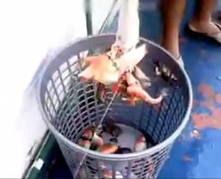 ピラニア釣るのに釣り竿なんて必要ない!斬新過ぎる釣り方で入れ食い状態w