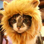 ネコ好きには閲覧注意|ライオンの檻に迷いこんだ猫ちゃんの末路…