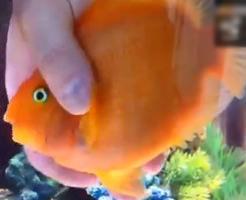 おもしろ動画|犬か猫のようにご主人様になつく魚がかわいいぞwwww