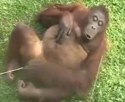 エロ動画|コレ見て勃起したヤツは人間失格、チンパン決定wwwww