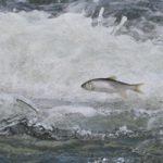 衝撃映像|かつてここまで荒ぶる魚を見たことがあっただろうか?いやない(反語)