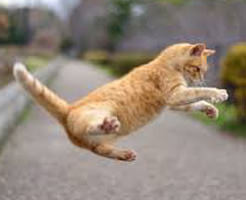 アニマルビデオ|かわいいだけじゃないにゃん!ハンターとしての猫さんがカッコイイ・・・