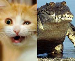 アニマルビデオ|一触即発!猫vsワニのガチバトル!意外な結末が・・・