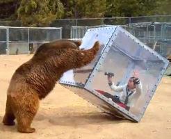 おもしろ動画|イモトwww イモトがクマに襲われて絶叫してる様子をご覧くださいw