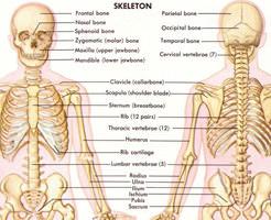 閲覧注意|お時間なんと25分、人体を丁寧に解剖する解体新書映像!