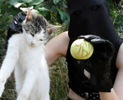 閲覧注意|こうやって猫の首をぎゅっと一捻り…猫解体した女の自撮り記録