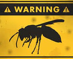 閲覧注意|相手を斬首、殺戮の限りを尽くす人間顔負けの戦いっぷり!オオスズメバチ同士の縄張り争いドキュメンタリー