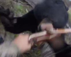 恐怖|弓装備のハンターにクマが真正面から突っ込んで来る、生きた心地がしない瞬間をFPS視点でお送りします