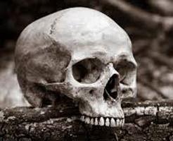 グロ動画|人間の死体が自然に分解されるまで観察してみた