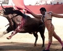 閲覧注意|スペインの人気闘牛士さん、よろめいた瞬間に角で刺され死亡=フランス