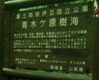 【グロ画像】国内で自殺者数トップの「青木ケ原樹海」、実際の現場状況はこんな感じ=日本
