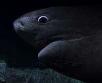 【衝撃】まるでパニック映画!暗闇の海底でサメの攻撃に遭うドキュメンタリー映像