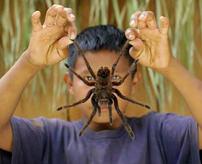 【衝撃】ガチ注意!世界の毒蜘蛛の恐怖は痛々しい咬傷を見ればわかる...