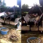 【閲覧注意】トウモロコシを収穫中の死亡事故原因が機械に吸い込まれ・・・