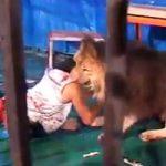 【閲覧注意】調教失敗?サーカスのライオンの檻に入った男性、頭を丸かじりされ食い殺される
