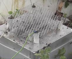 スズメバチの巣の出入り口に5600ボルトの電気網トラップ設置!経過観察がこちらw