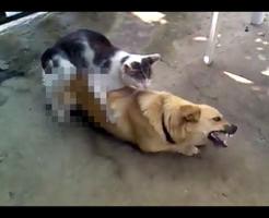 【おもしろ】や・ら・な・い・か。猫と犬の異種姦、ワンちゃんを後ろからにゃんにゃんw