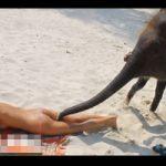 【エロ動画】美女の股間に鼻を突っ込もうする象さんがただの変態にしか見えない・・・
