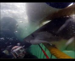 【恐怖映像】檻に入ってサメのいる海にダイブ 安全だと思っていたらサメが弾丸の如きスピードで・・・