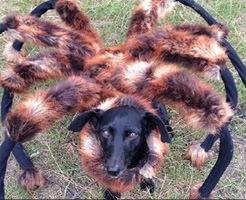 【恐怖映像】ワンちゃんに蜘蛛のコスプレ服!夜に出くわした人たちの反応がこれw