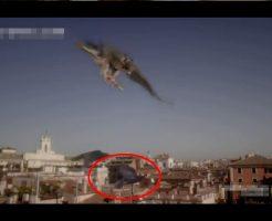 鳥類最速のハンター「はやぶさ」狩りの瞬間が早すぎて絶対逃げられないスロー映像