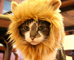 ネコ好きには【閲覧注意】ライオンの檻に迷いこんだ猫ちゃんの末路…