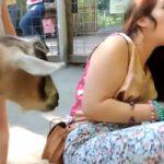 かわいい動物たち(一部除く)のかわいいくしゃみシーンをまとめてみたwww