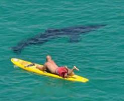 人食い鮫の話しようぜ!サメの注意喚起を呼びかける動画がグロすぎる・・・