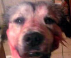 【グロ画像】愛護団体激おこ!犬・猫・兎などなど可愛い動物たちの死体がいっぱい!