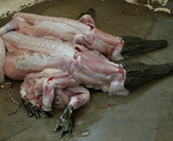 【グロ画像】いろんな動物たちの死体まとめました…ワニがちょっと美味そうw