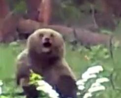 人間vs熊のガチの殺し合い!この数秒後にどちらかが絶命