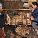 【グロ画像】犬は人間の友である!食料として見ているあの国を除いては・・・※閲覧注意