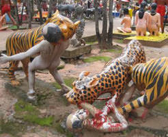 中国の動物園にて、トラの群れにリンチされた男性が死亡