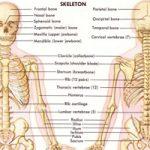 【閲覧注意】お時間なんと25分、人体を丁寧に解剖する解体新書映像!
