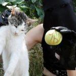【閲覧注意】こうやって猫の首をぎゅっと一捻り…猫解体した女の自撮り記録