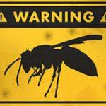 相手を斬首、殺戮の限りを尽くす人間顔負けの戦いっぷり!オオスズメバチ同士の縄張り争いドキュメンタリー