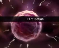 【エロ?】人体で精子と卵子が受精する瞬間wエロくないのにエロく見えるだと…?