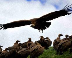 【鳥葬】煙も出ず土壌汚染もせず環境にやさしい究極のエコ!食べやすいように遺体解体する現場に撮影いってきた