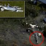 飛行機が沼地に墜落、機体から振り落とされたパイロット、ワニのエサになる