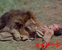 【閲覧注意】「敵意がなければ襲われないんだよ」ライオン撮影中のカメラマン、家族の目の前で食い殺される