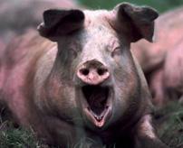 3トンの豚の死体を森に放置して腐っていく様子を撮影した映像
