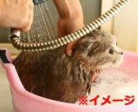入浴する時に「No more」と獣医に伝える猫ちゃんが可愛い!