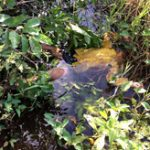 【閲覧注意】水面に浮かぶ殺された7歳の少女の遺体...逮捕された男が憎い=カンボジア