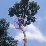 【衝撃】何事も安全第一!木を切り落とす高所作業で起きた落下事故